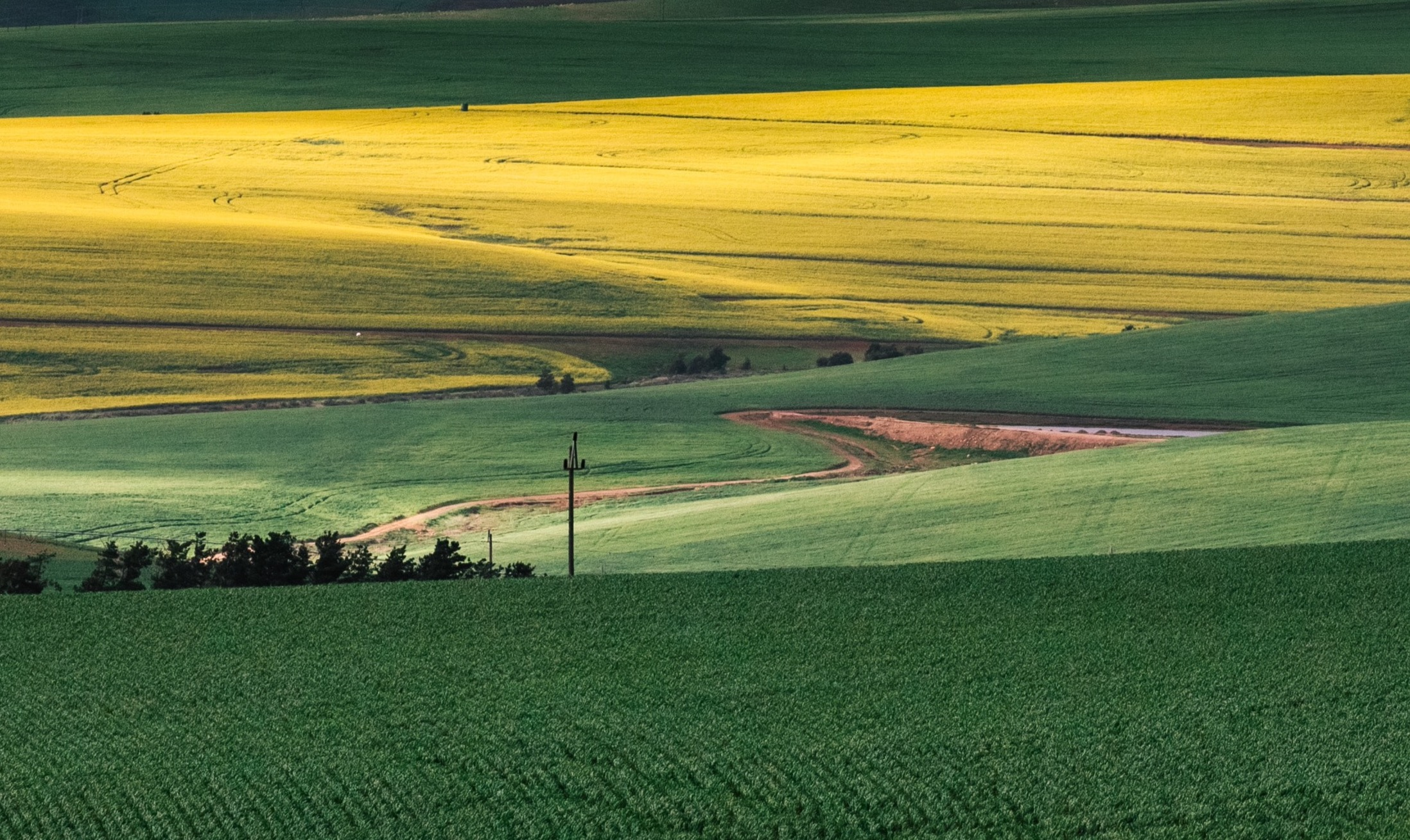 Why Would You Invest in Farmland?